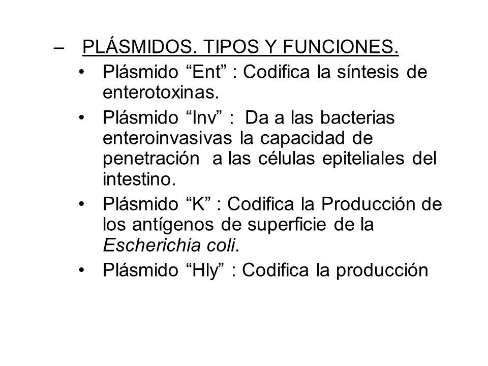 PLÁSMIDOS. TIPOS Y FUNCIONES.