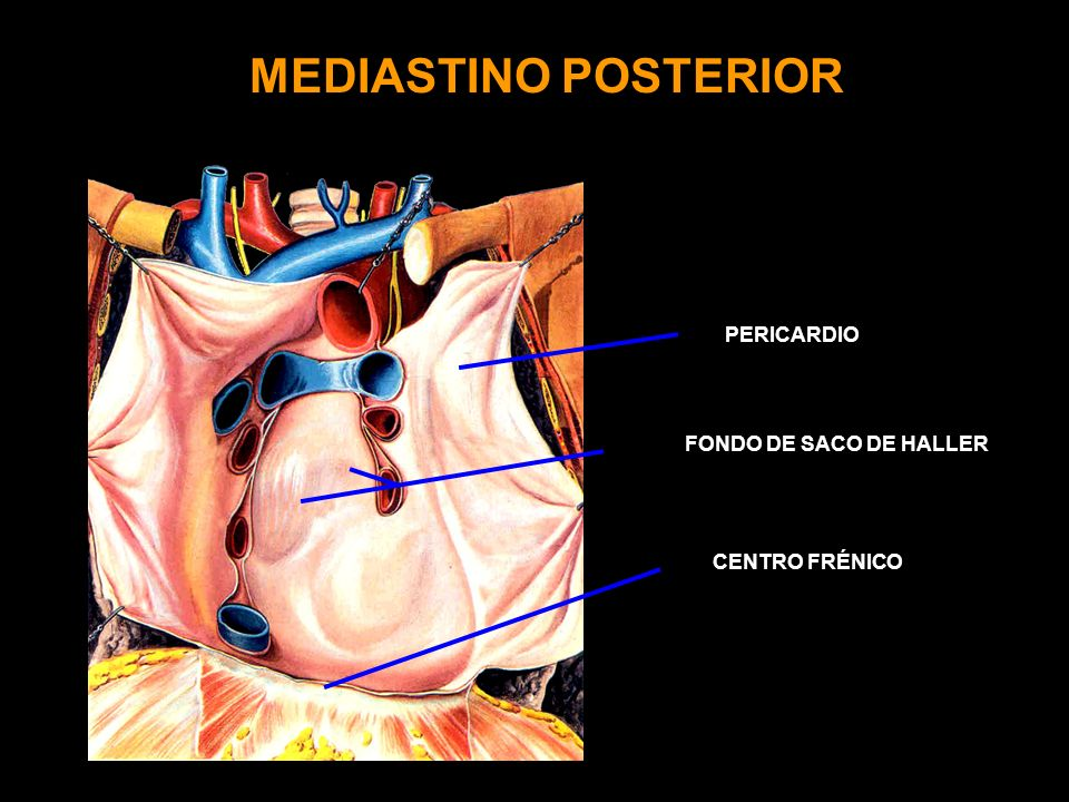 MEDIASTINO POSTERIOR PERICARDIO FONDO DE SACO DE HALLER CENTRO FRÉNICO