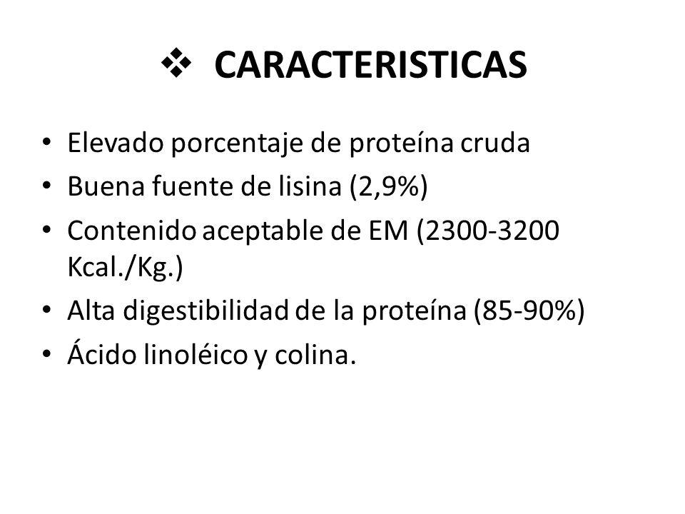 CARACTERISTICAS Elevado porcentaje de proteína cruda