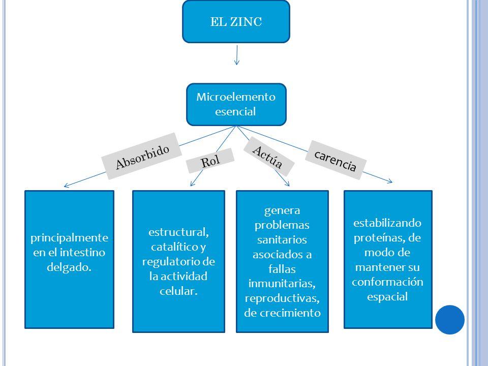 carencia EL ZINC Microelemento esencial Absorbido Actúa Rol