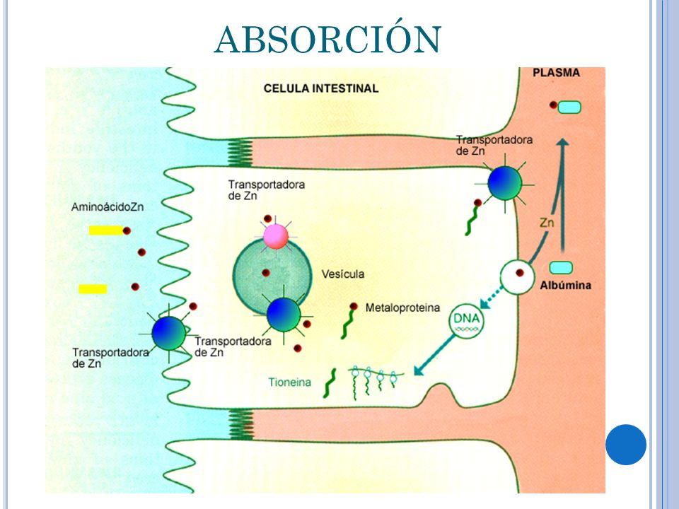 absorción