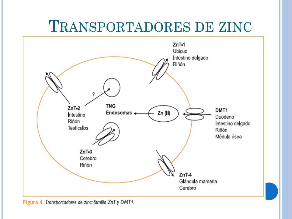 Transportadores de zinc