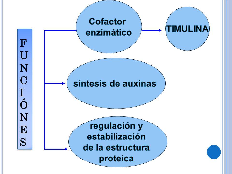 FUNC IÓNES Cofactor enzimático TIMULINA síntesis de auxinas