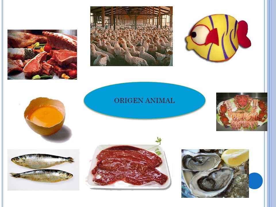 ORIGEN ANIMAL