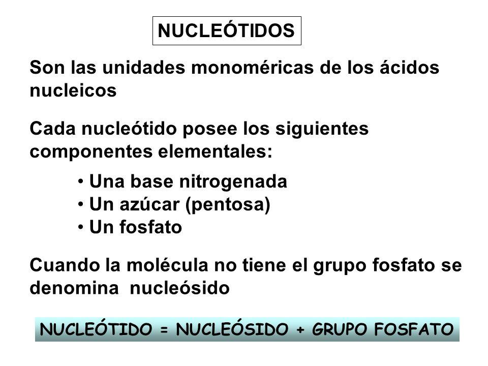 Son las unidades monoméricas de los ácidos nucleicos