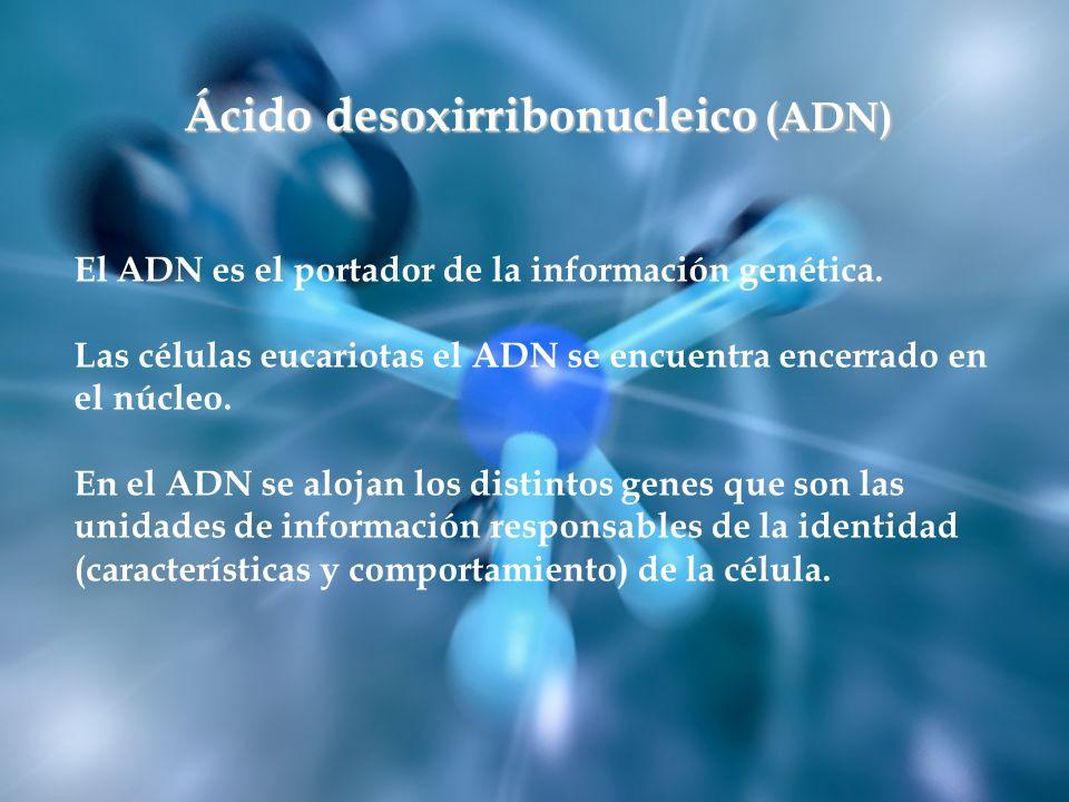 Ácido desoxirribonucleico (ADN)