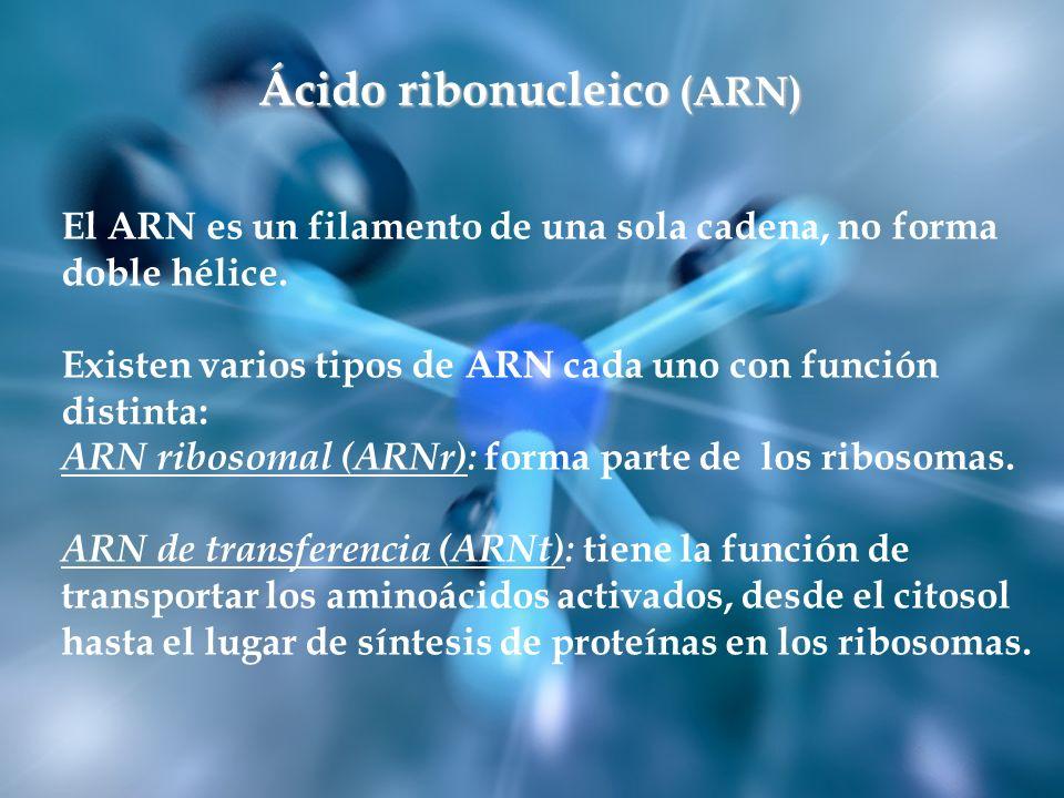 Ácido ribonucleico (ARN)