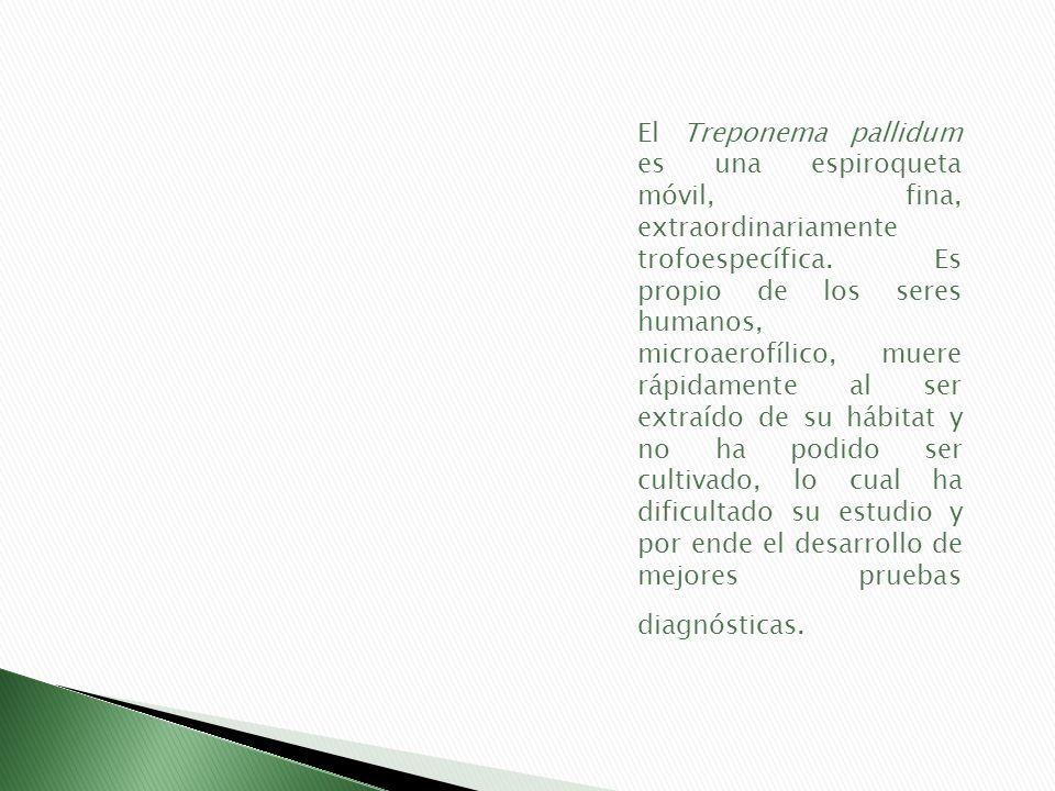 El Treponema pallidum es una espiroqueta móvil, fina, extraordinariamente trofoespecífica.