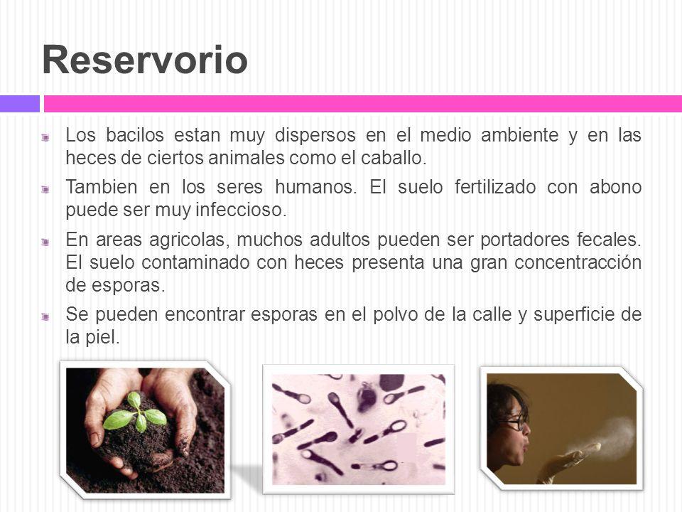 Reservorio Los bacilos estan muy dispersos en el medio ambiente y en las heces de ciertos animales como el caballo.