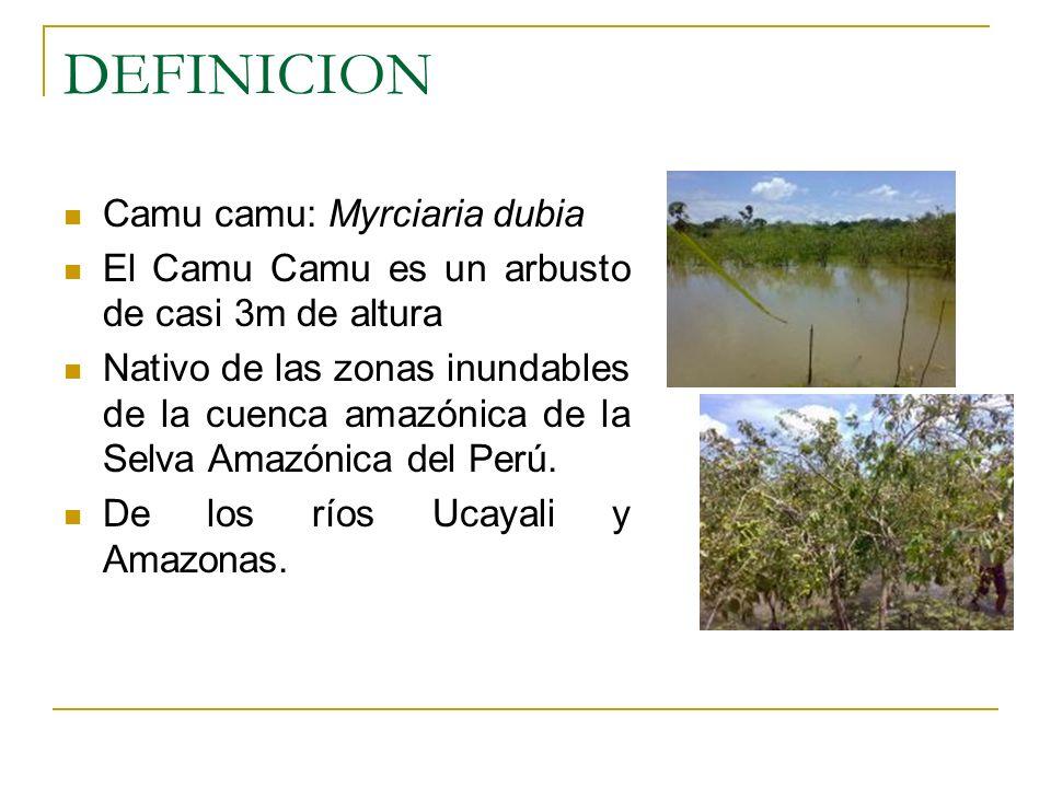 DEFINICION Camu camu: Myrciaria dubia