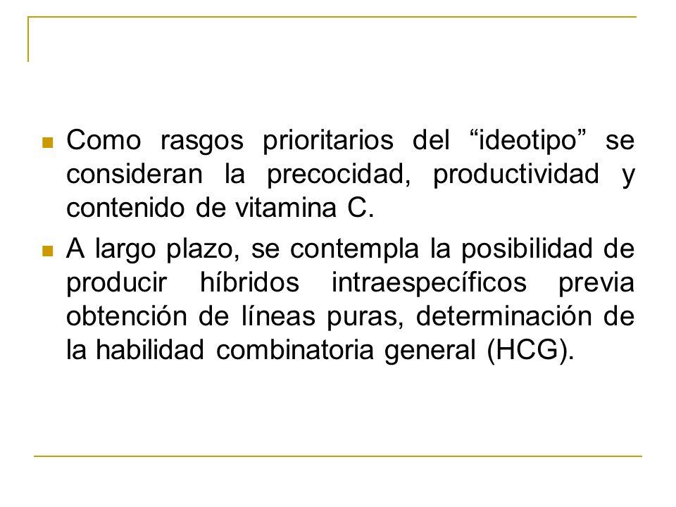 Como rasgos prioritarios del ideotipo se consideran la precocidad, productividad y contenido de vitamina C.