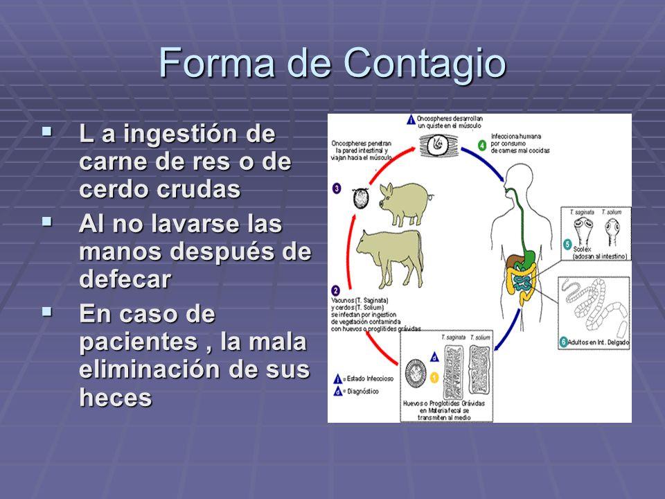 Forma de Contagio L a ingestión de carne de res o de cerdo crudas