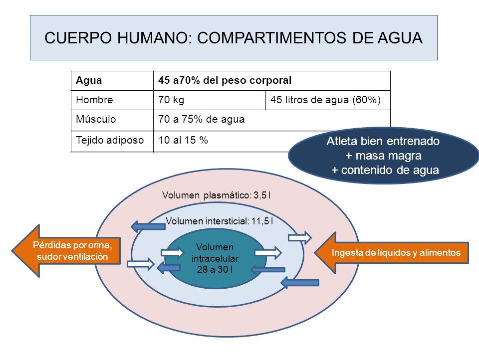 CUERPO HUMANO: COMPARTIMENTOS DE AGUA