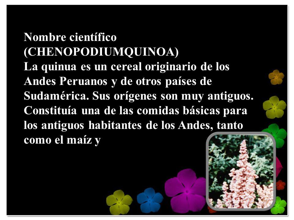 Nombre científico (CHENOPODIUMQUINOA)
