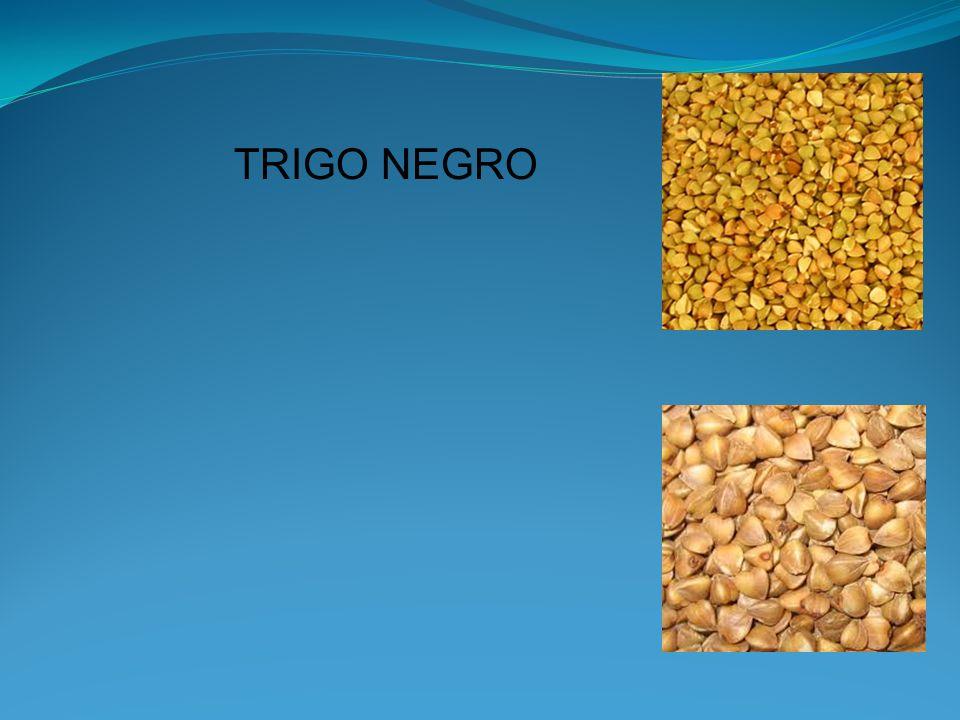 TRIGO NEGRO