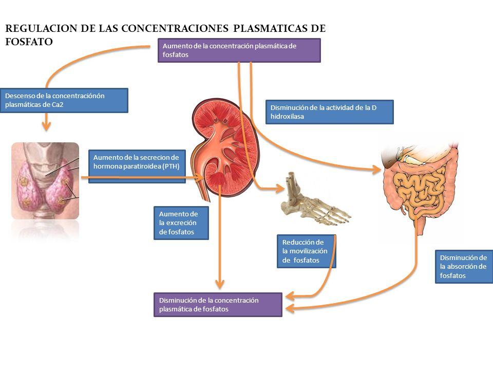 REGULACION DE LAS CONCENTRACIONES PLASMATICAS DE FOSFATO