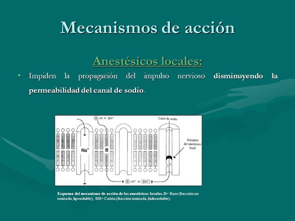 Mecanismos de acción Anestésicos locales: