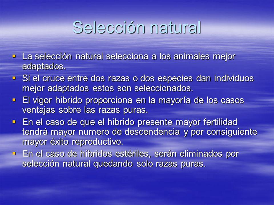 Selección natural La selección natural selecciona a los animales mejor adaptados.