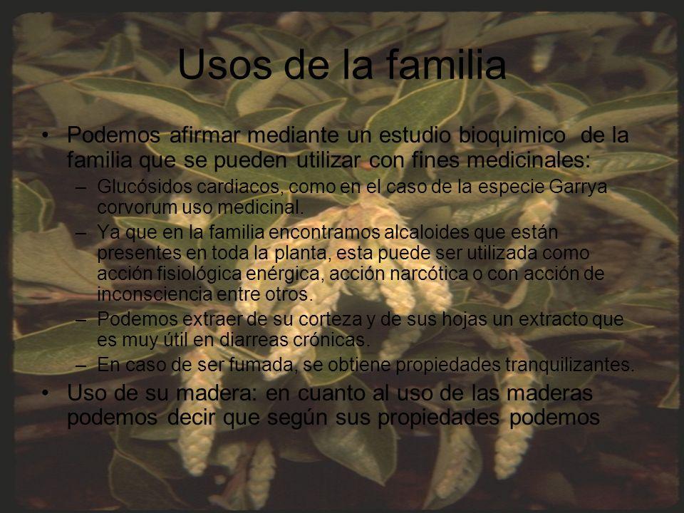 Usos de la familia Podemos afirmar mediante un estudio bioquimico de la familia que se pueden utilizar con fines medicinales: