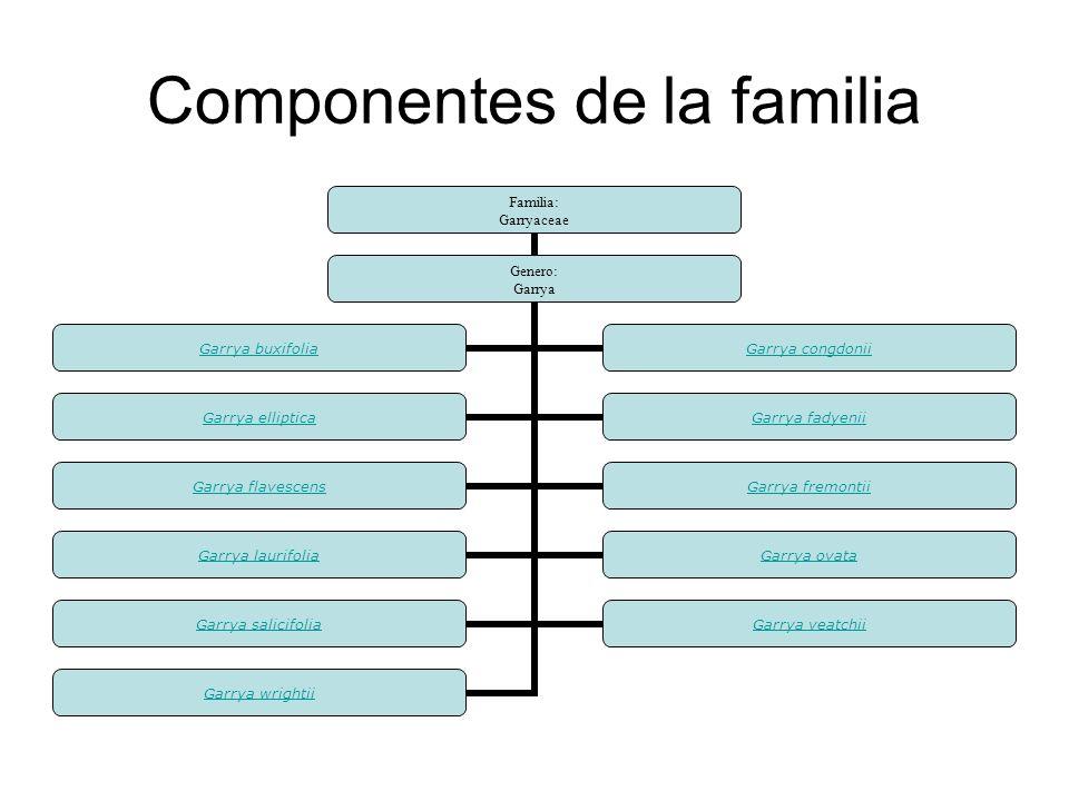 Componentes de la familia