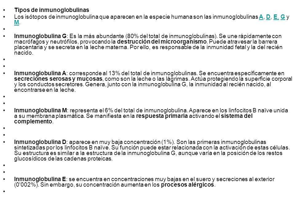 Tipos de inmunoglobulinas