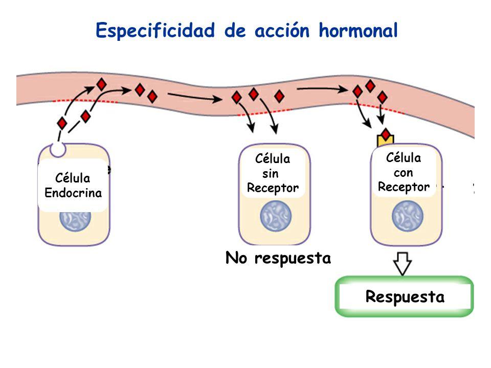 Especificidad de acción hormonal