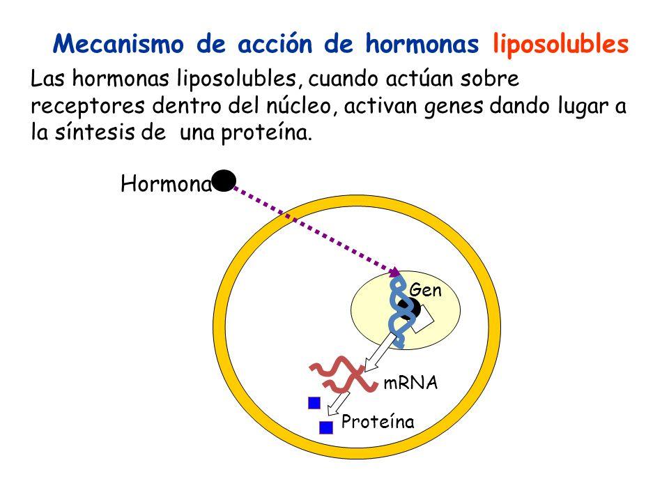 Mecanismo de acción de hormonas liposolubles