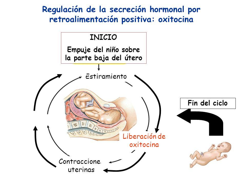 Empuje del niño sobre la parte baja del útero