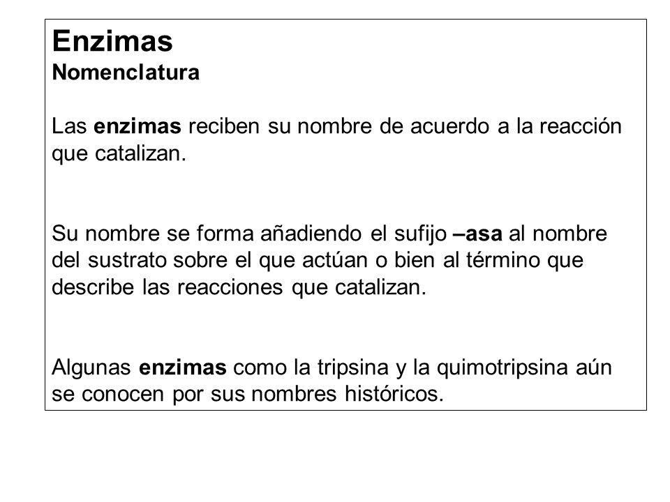 Enzimas Nomenclatura Las enzimas reciben su nombre de acuerdo a la reacción que catalizan.