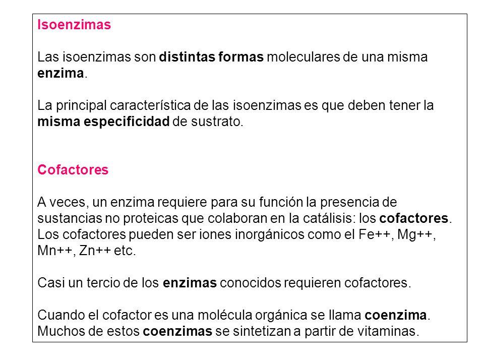 Isoenzimas Las isoenzimas son distintas formas moleculares de una misma enzima.