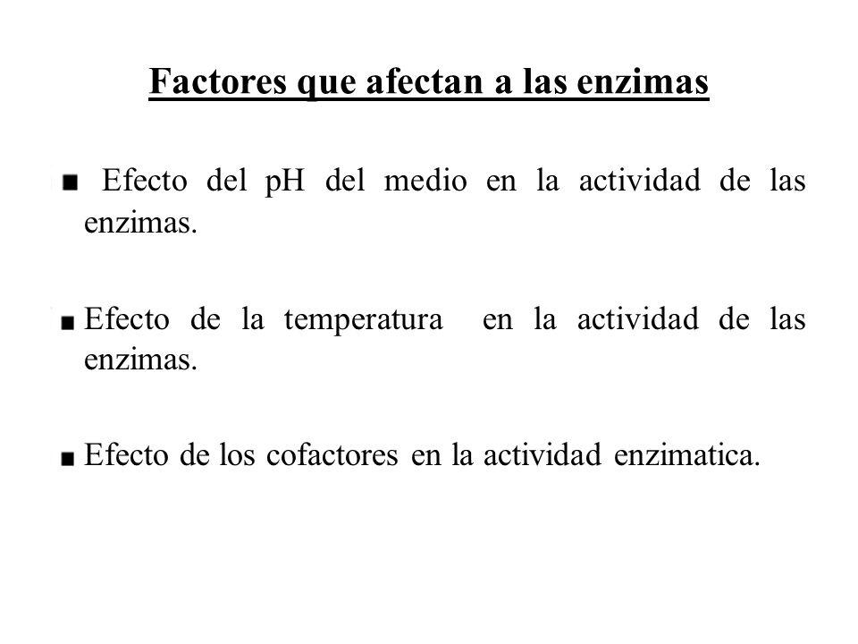 Factores que afectan a las enzimas