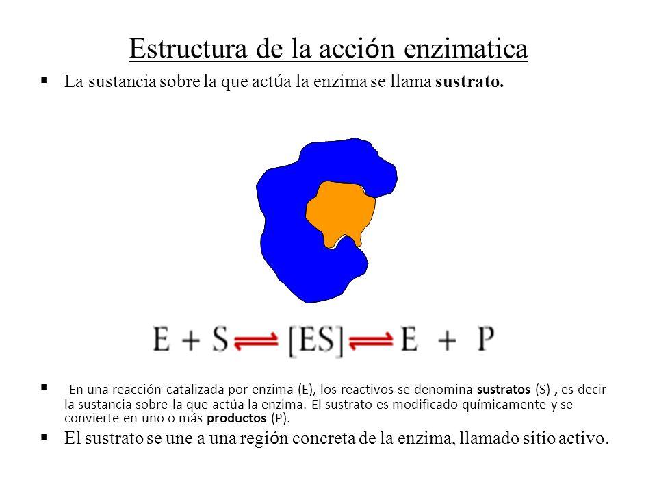 Estructura de la acción enzimatica