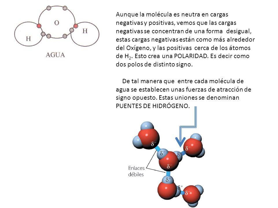 Aunque la molécula es neutra en cargas negativas y positivas, vemos que las cargas negativas se concentran de una forma desigual, estas cargas negativas están como más alrededor del Oxígeno, y las positivas cerca de los átomos de H2. Esto crea una POLARIDAD. Es decir como dos polos de distinto signo.