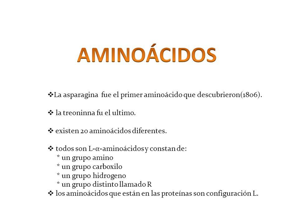 AMINOÁCIDOS La asparagina fue el primer aminoácido que descubrieron(1806). la treoninna fu el ultimo.