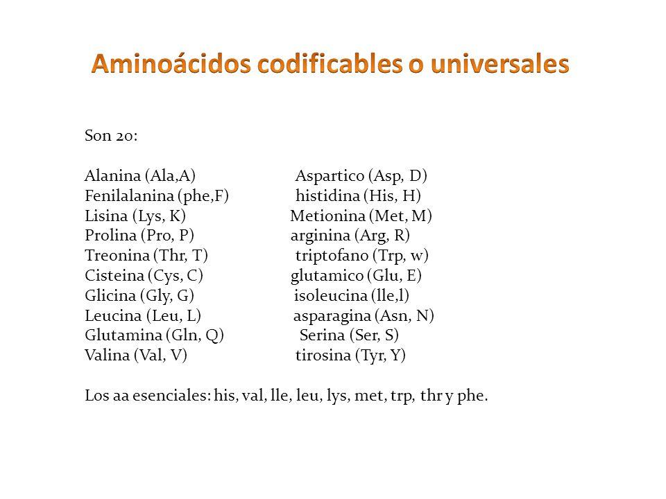 Aminoácidos codificables o universales