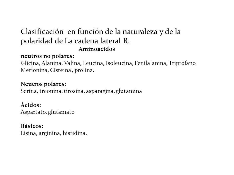 Clasificación en función de la naturaleza y de la polaridad de La cadena lateral R.