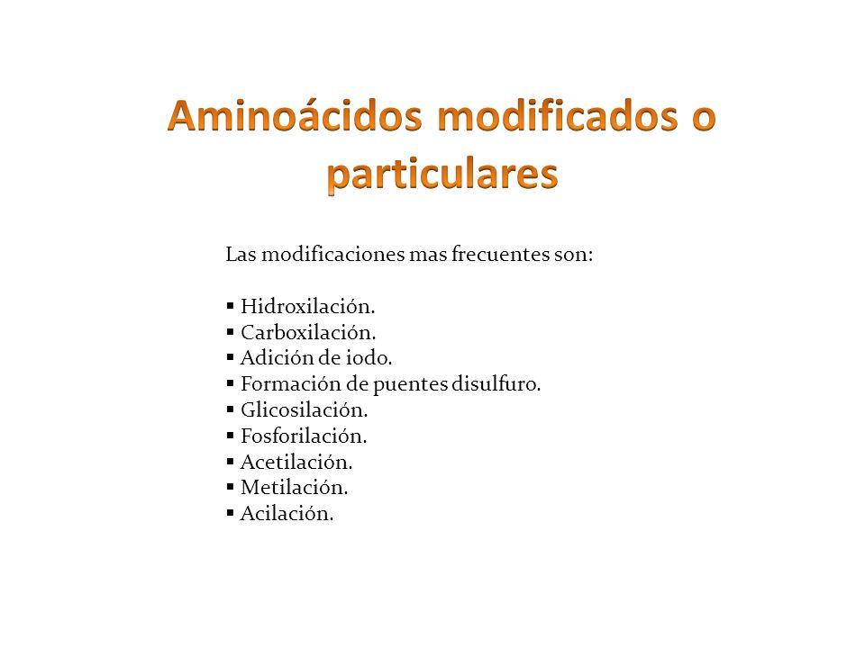 Aminoácidos modificados o particulares