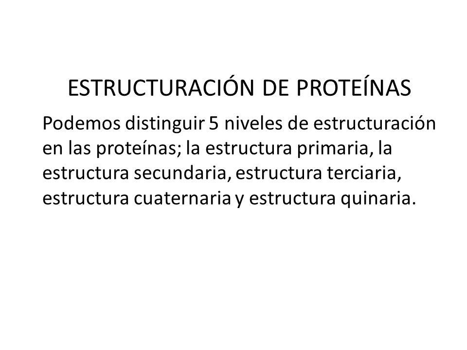 ESTRUCTURACIÓN DE PROTEÍNAS