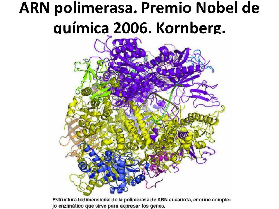 ARN polimerasa. Premio Nobel de química 2006. Kornberg.