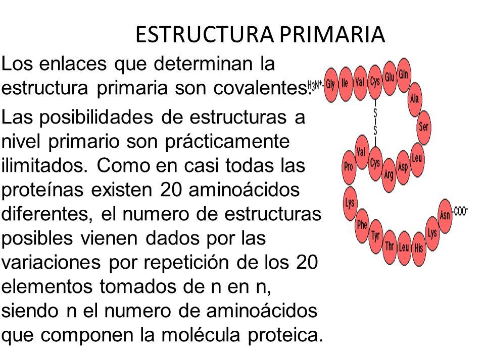ESTRUCTURA PRIMARIA Los enlaces que determinan la estructura primaria son covalentes.