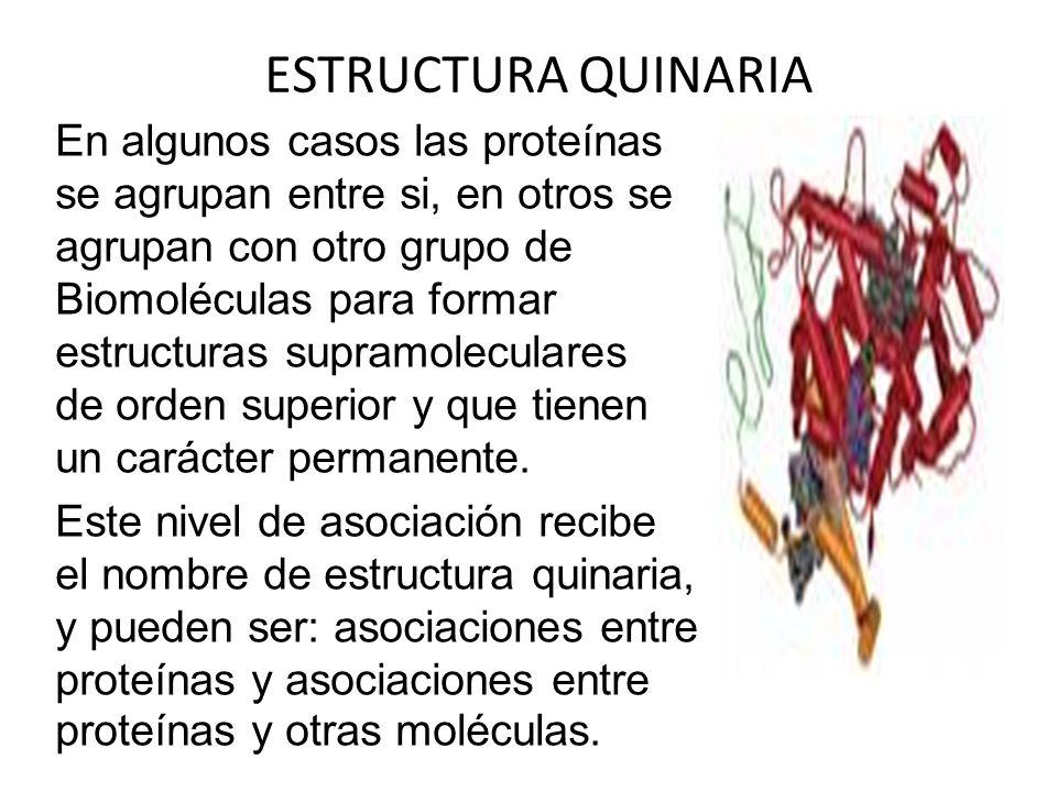 ESTRUCTURA QUINARIA