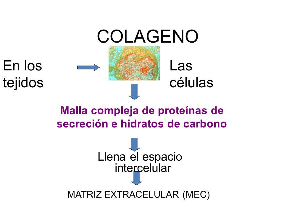 Malla compleja de proteínas de secreción e hidratos de carbono