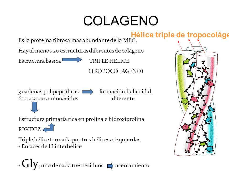 Hélice triple de tropocolágeno