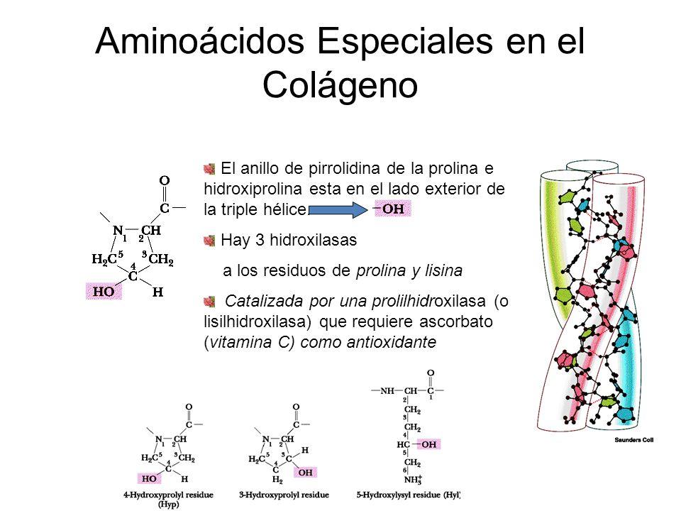 Aminoácidos Especiales en el Colágeno