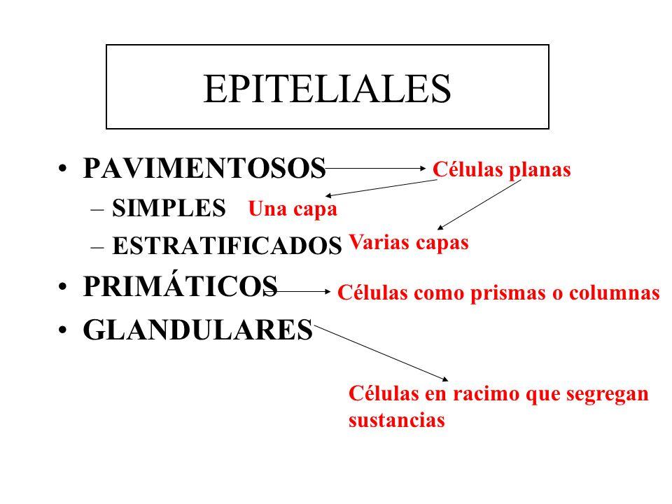EPITELIALES PAVIMENTOSOS PRIMÁTICOS GLANDULARES SIMPLES ESTRATIFICADOS