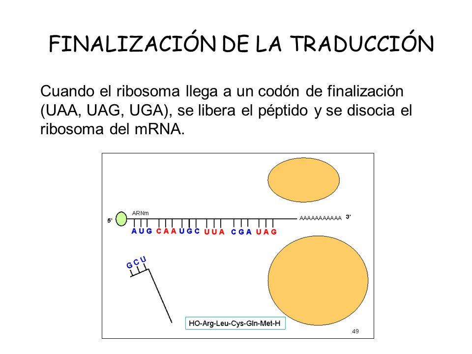 FINALIZACIÓN DE LA TRADUCCIÓN