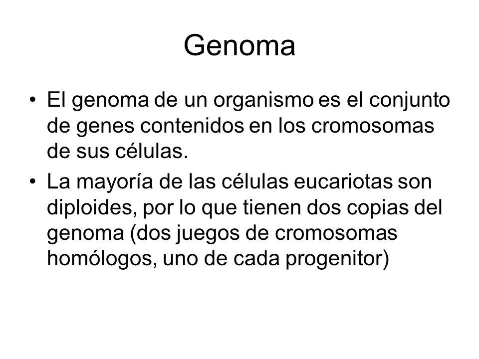 Genoma El genoma de un organismo es el conjunto de genes contenidos en los cromosomas de sus células.
