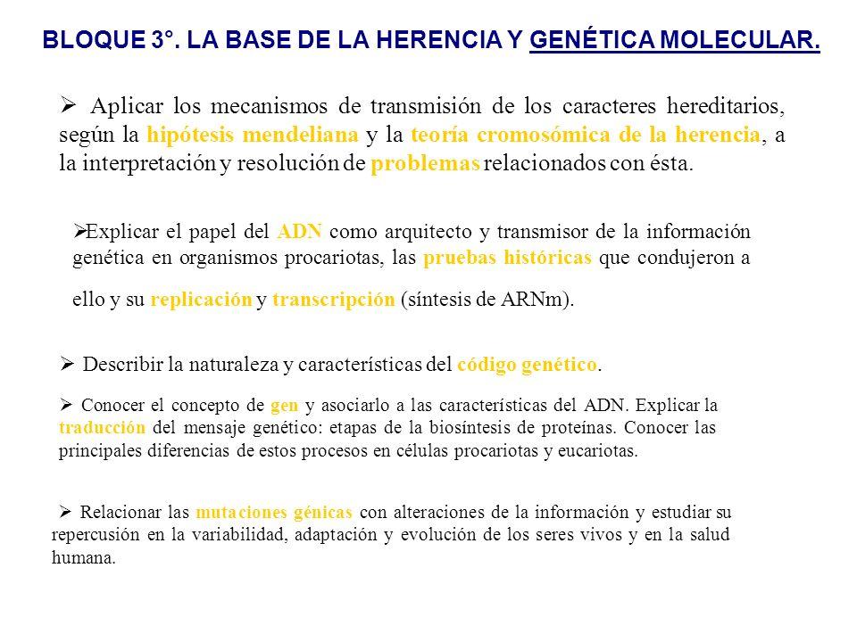BLOQUE 3°. LA BASE DE LA HERENCIA Y GENÉTICA MOLECULAR.