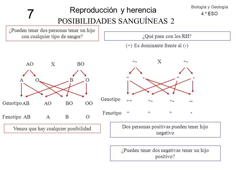 7 Reproducción y herencia POSIBILIDADES SANGUÍNEAS 2