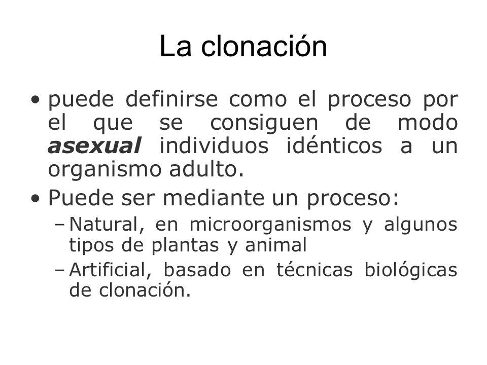 La clonación puede definirse como el proceso por el que se consiguen de modo asexual individuos idénticos a un organismo adulto.